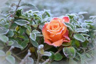 На Украину надвигается шторм с заморозками