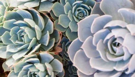 Найменш примхливі кімнатні рослини