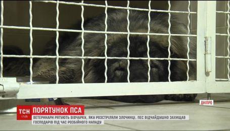 Ветеринары спасают овчарку, в которую стреляли из ружья в Днепре