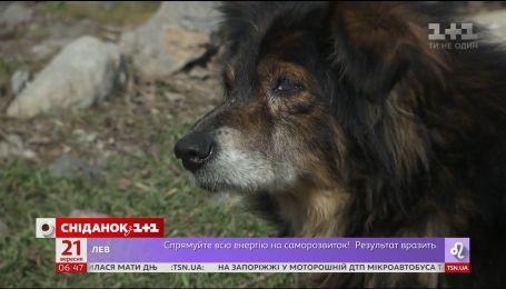 Из-за угрозы чумы в Украине уничтожают бездомных животных
