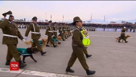 Службові собаки та цуценята стали окрасою військового параду у Чилі