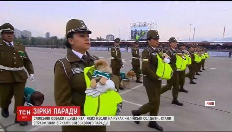 В Чили участие в военном параде приняли служебные собаки и щенки