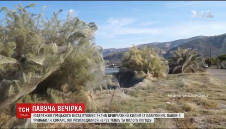 Побережье греческого города Етолико покрыл огромный ковер из паутины