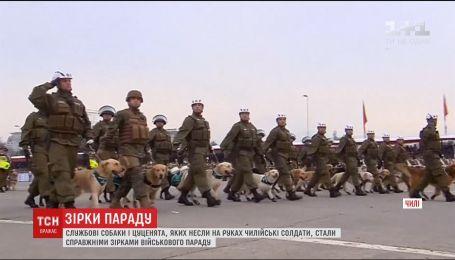 Служебные собаки и щенки стали украшением военного парада в Чили