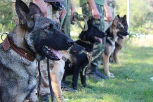 В Киеве появился банк крови для собак