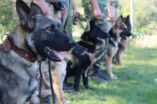 До розшуків зниклої на Кіровоградщині Діани Хріненко долучилися кінологи із собаками