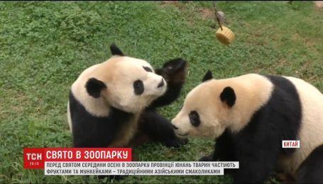 Мункейки та тарілки фруктів -  у Китаї частують жителів зоопарку