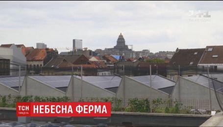 У центрі Брюсселя на даху розмістили 4 тисячі квадратних метрів овочевих плантацій