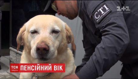 В Колумбии служебных собак с почестями отправляют на пенсию