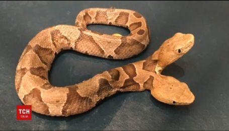В США жінку переполохала двоголова змія