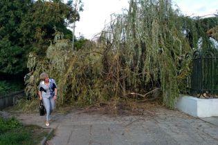 У Львові потужний вітер повалив дерева, розтрощив зупинки та обірвав дроти