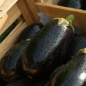 На украинских рынках бум на баклажаны: сколько стоит овощ
