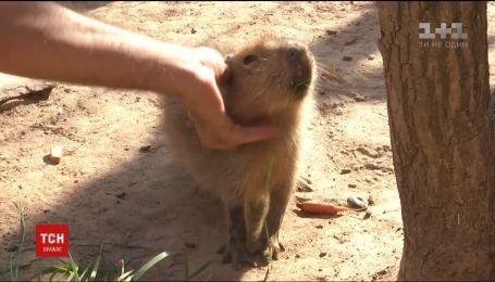 Бебі-бум у світі тварин. Малечу, яка народилася влітку, показали у звіринці під Києвом
