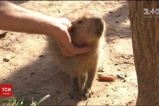 Бэби-бум в мире животных. Малышей, которые родились летом, показали в зверинце под Киевом