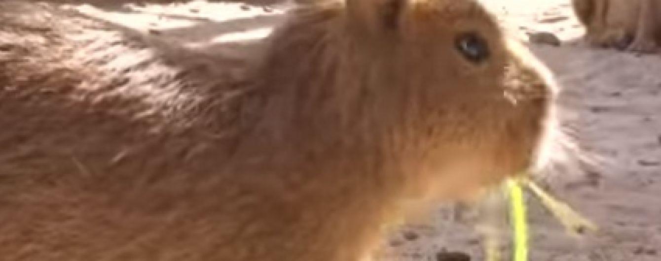 Животный беби-бум: в зоопарке под Киевом показали рожденных летом детенышей
