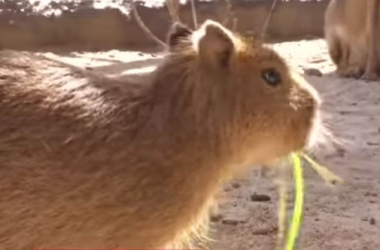 Тваринний бебі-бум: у зоопарку під Києвом показали народжених улітку дитинчат