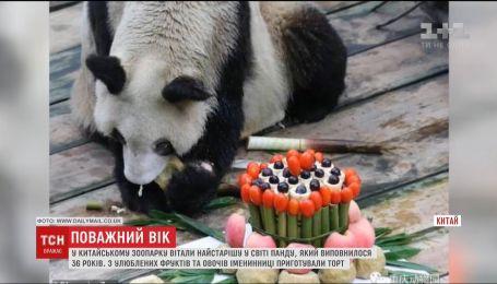 Для старейшей панды мира в Китае приготовили специальный торт