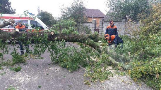 На Львівщині через негоду гілка дерева вбила людину