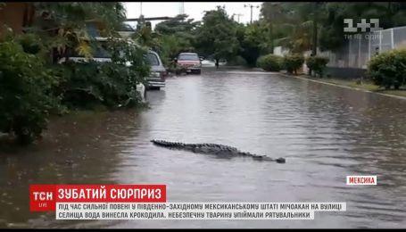 В Мексике к затопленному наводнением поселку приплыл крокодил