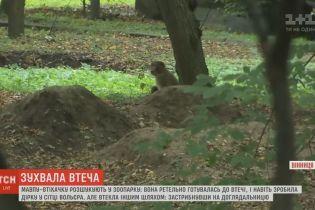 У Вінниці шукають мавпу, яка спланувала свою втечу із зоопарку