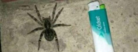 Українські тарантули атакують Білорусь