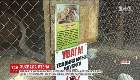 В Виннице из зоопарка сбежала обезьяна