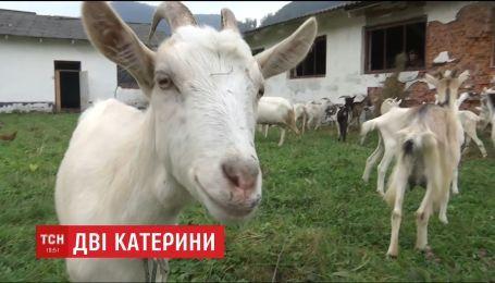 Переселенка из Донбасса и жительница Львовщины основали козью ферму, где делают сыры