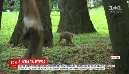 В Виннице разыскивают обезьяну. Самец по кличке Филя сбежал из мини-зоопарка