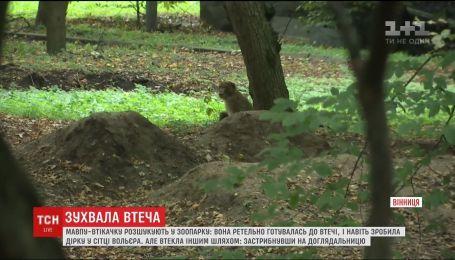 У Вінниці розшукують мавпу, яка втекла з міні-зоопарку