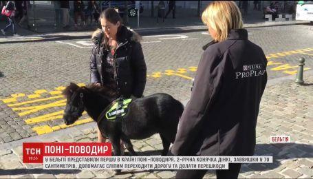 В Бельгии представили первого в стране пони-поводыря