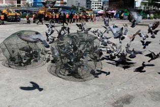 У Таїланді оголосили війну голубам – за годування птахів хочуть карати в'язницею