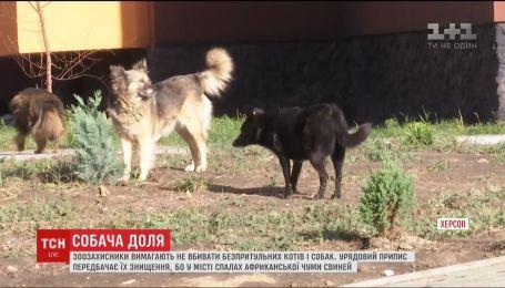 В Херсоне могут убить всех бездомных собак и кошек