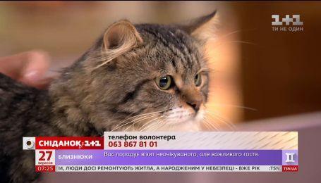 Котик-найденыш ищет новый дом