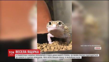 Новой звездой соцсетей стал домашний геккон, который улыбается