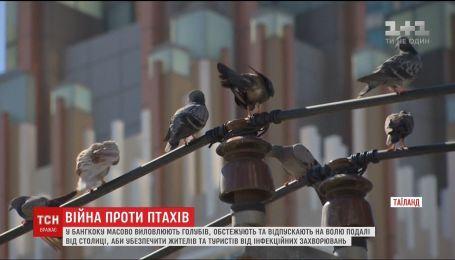 Тайская война с птицами. В Бангкоке массово вылавливают голубей