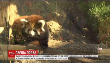 В США в зоопарке показали посетителям детеныша красной панды