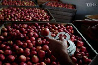 Яблука по 50 копійок за кіло: небувалий врожай обвалив ціни на Дніпропетровщині