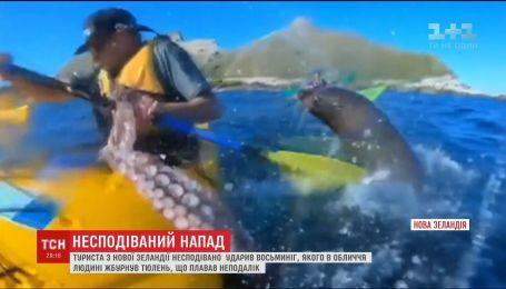 Тюлень ударил туриста из Новой Зеландии осьминогом по лицу