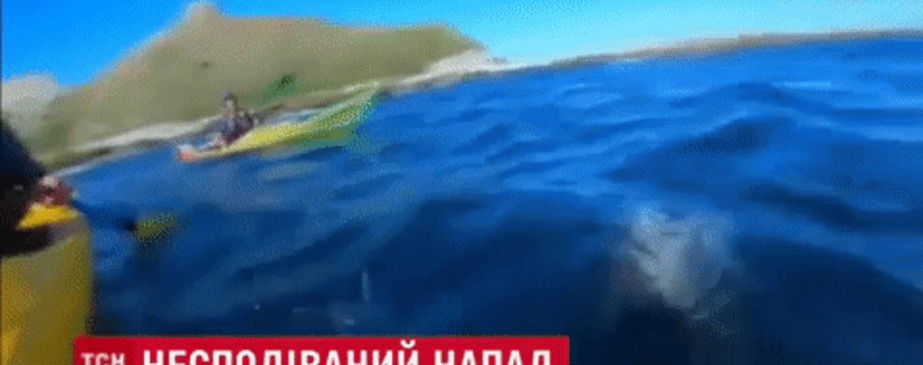 У Новій Зеландії тюлень винирнув з моря й ляснув по обличчю туриста восьминогом