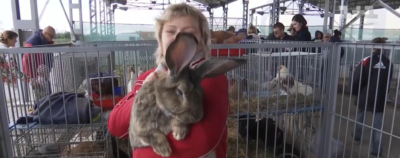 От 10-килограммового кроля до мощных комбайнов. В Кропивницком устроили масштабную агровыставку