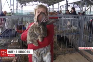 Від 10-кілограмового кроля до потужних комбайнів. У Кропивницькому влаштували масштабну агровиставку