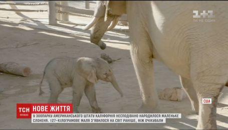 У каліфорнійському зоопарку народилося маленьке слоненя