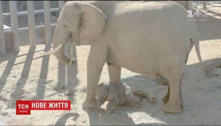 Сюрприз весом в 127 кг. В калифорнийском зоопарке родился слоненок