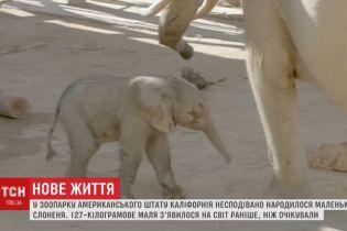 В калифорнийском зоопарке неожиданно родился слоненок весом почти 130 кг