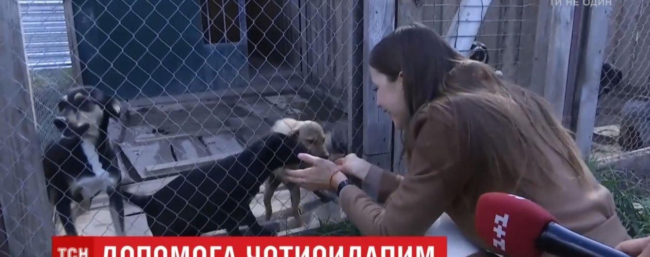 """""""Мисс Земля"""" Анастасия Кривохижа просит помочь приюту для животных"""
