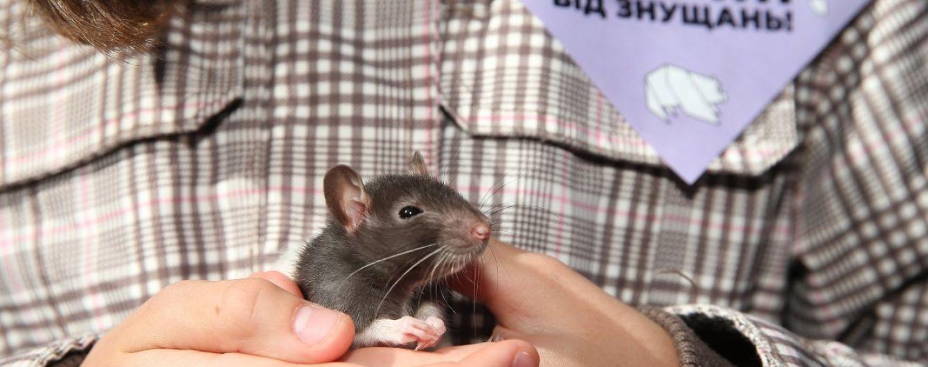 В столичном заведении животных держат в клетках для развлечения посетителей. Зоозащитники бьют тревогу