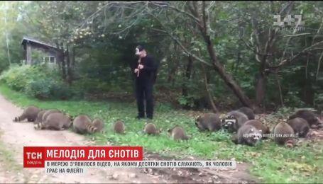 Десятки енотов сбежались в кучу, чтобы послушать игру мужчины на флейте