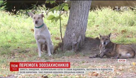 В Херсоне приняли решение не убивать, а обследовать бездомных собак