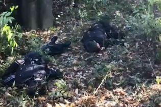 В Интернете появились кадры с места подрыва четырех детей на мине возле Горловки