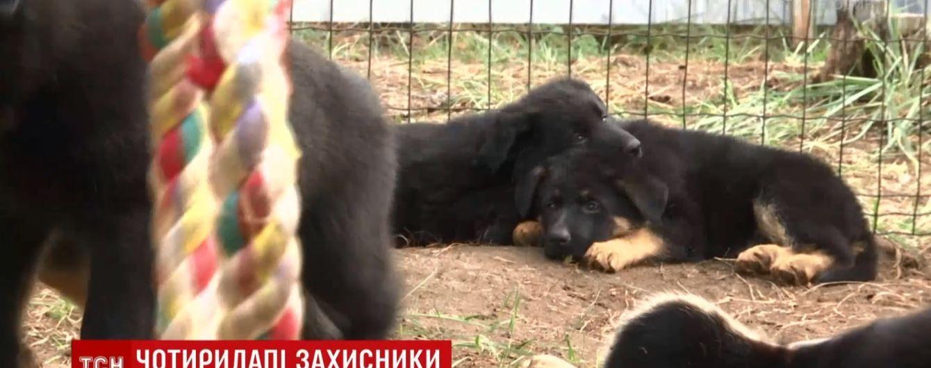 Кінологи показали милих цуциків, яких виховуватимуть для бойових завдань на Донбасі